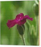 One Blossom Wood Print