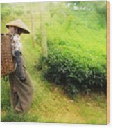 One Day In Tea Plantation  Wood Print