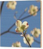 One Dogwood Blooms Wood Print