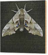 One Eyed Sphinx Moth Wood Print