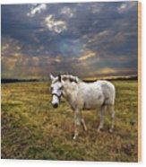 One Horse Wood Print