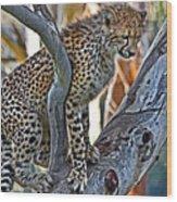 One Little Cheetah Sitting In A Tree Wood Print