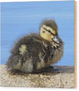One Little Duckling Wood Print