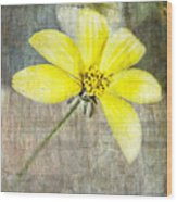 One Must Have Sunshine Freedom And A Little Flower Wood Print