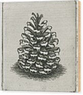 One Pinecone Wood Print