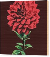 One Red Dahlia Wood Print