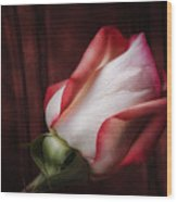 One Red Rose Still Life Wood Print