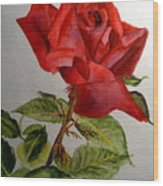 One Single Red Rose Wood Print