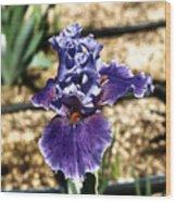 One Sole Iris In Bloom Wood Print