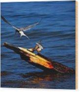 One Tern Flight Wood Print by Amanda Struz