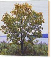 One Tree Hudson River View Wood Print