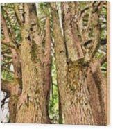 One Tree Six Trunks Wood Print