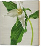 One Trillium Wood Print