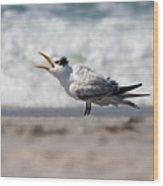 One Upset Royal Tern Wood Print