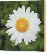 One White Daisy Wood Print