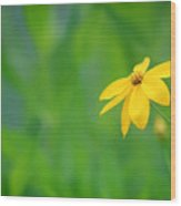 One Yellow Coreopsis Flower Wood Print
