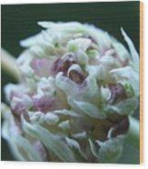 Onion Blossom Wood Print