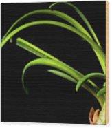 Onion Greens Wood Print