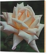 Only A Rose Wood Print