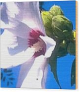 Open Hibiscus Flower With Deep Blue Sky Wood Print