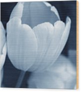 Opening Tulip Flower Blue Monochrome Wood Print