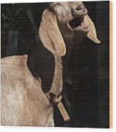 Operatic Goat Wood Print