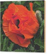 Opium  Wood Print