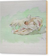 Opossum Skull Wood Print