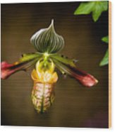 Oprah's Orchid Wood Print