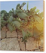 Opuntia Cactus In The Sunset Wood Print