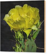 Opuntia Robusta Flower Wood Print