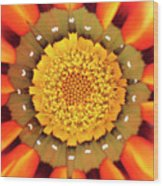 Orange African Daisy Wood Print