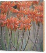 Orange Aloe  Wood Print
