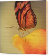 Orange And Black Butterfly Sitting On The Yellow Petal Wood Print