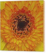 Orange And Black Gerber Center Wood Print