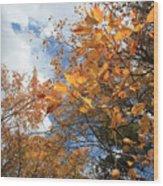 Orange And Blue Wood Print