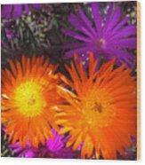 Orange And Fuchsia Color Flowers Wood Print
