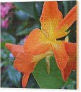 Orange And Yellow Canna Lily 2  Wood Print