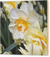 Orange And Yellow Double Daffodil Wood Print