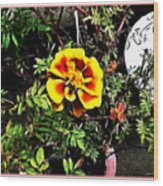 Orange And Yellow Flower Wood Print
