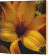 Orange And Yellow Lily Wood Print