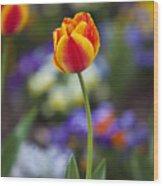 Orange And Yellow Tulip Wood Print
