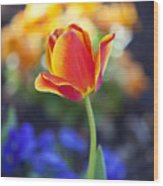 Orange And Yellow Tulip II Wood Print