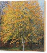 Orange Autumn Tree Wood Print