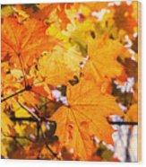 Fall Of Orange Leaves Wood Print