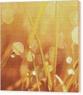 Orange Awakening Wood Print