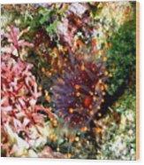 Orange Ball Corallimorph Anemone Wood Print