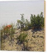 Orange Beach Umbrella  Wood Print