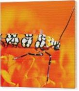 Orange Beetle On Orange Flower Wood Print