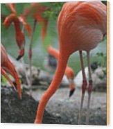 Orange Bird Wood Print